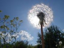 пушистое солнце Стоковые Фото