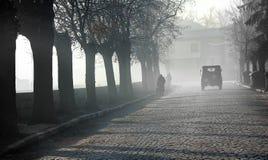 пушистое утро Стоковое Изображение RF