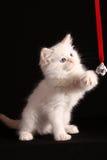пушистые игры котенка Стоковая Фотография RF