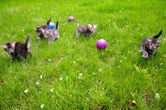Пушистые котята Стоковые Фото