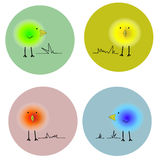 Пушистые яркие птицы в кругах Стоковое Фото
