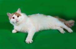Пушистый белый кот при красные пятна лежа на зеленом цвете Стоковые Фотографии RF