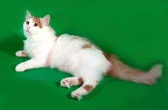 Пушистый белый кот при красные пятна лежа на зеленом цвете Стоковое Фото