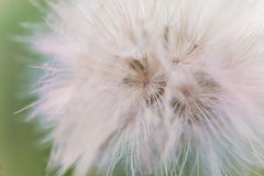 Пушистый белый цветок