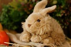 Пушистый зайчик игрушки Стоковое фото RF