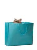 пушистый котенок Стоковые Фотографии RF