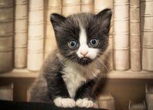 пушистый котенок Стоковое Изображение