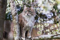 Пушистый кот весной Стоковые Фотографии RF