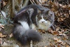 Пушистый кот вытаращить на что-то стоковое фото
