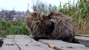 Пушистый кот сидит на деревянном мосте, сильный ветер дует и внезапно другой кот причаливает акции видеоматериалы
