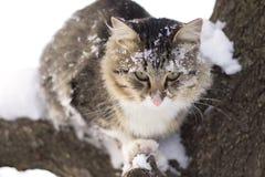 Пушистый кот сидя на ветви дерева в зиме Стоковые Изображения