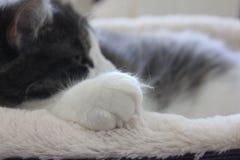 Пушистый кот спать в кровати Стоковая Фотография