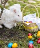 Пушистый кролик angora есть травы на траве Стоковое Фото