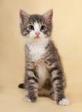 Пушистый малый striped котенок сидя на желтом цвете Стоковые Фото