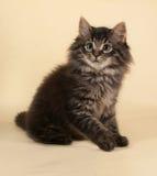 Пушистый малый striped котенок сидя на желтом цвете Стоковые Фотографии RF