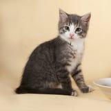 Пушистый малый striped котенок сидя на желтом цвете Стоковая Фотография RF