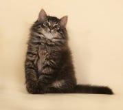 Пушистый малый striped котенок сидя на желтом цвете Стоковое Фото