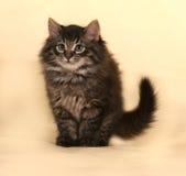 Пушистый малый striped котенок сидя на желтом цвете Стоковое Изображение