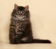 Пушистый малый striped котенок сидя на желтом цвете Стоковое фото RF