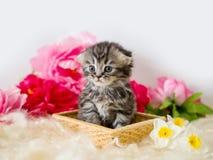 Пушистый серый котенок в корзине с цветками Стоковые Фотографии RF