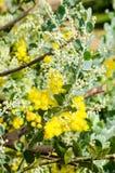 Пушистый душистый желтый цвет Стоковая Фотография