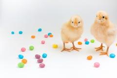 2 пушистых желтых цыпленока стоя в мармелад-горошках пасхи Стоковая Фотография RF