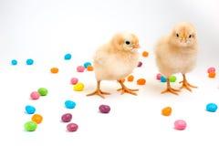 2 пушистых желтых цыпленока с мармелад-горошками пасхи Стоковые Изображения