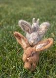 3 пушистых зайчики или кролика в вертикальном стоге на зеленой траве Стоковое Изображение RF