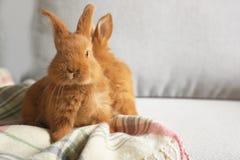 2 пушистых кролика сидя на кресле Стоковое фото RF