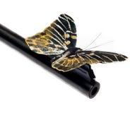 пушка бабочки бочонка Стоковое Изображение