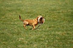 пушка собаки восстановляет Стоковое Изображение
