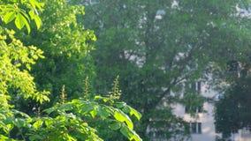 Пушок тополя летает в воздух города летом сток-видео