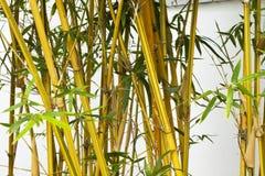 пуща бамбука предпосылки Стоковые Изображения