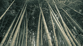 пуща бамбука предпосылки Стоковая Фотография