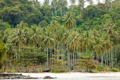 Пуща вала кокоса Стоковое Фото
