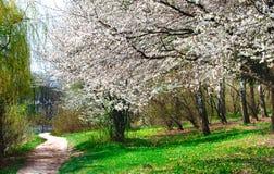 Пуща весны к весеннее время. Стоковое Изображение RF