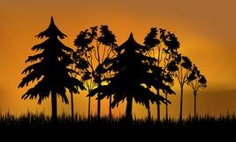 пуща вечера Стоковое Фото