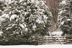 пуща входа снежная Стоковые Изображения