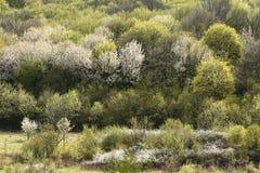 Пуща в весеннем времени предпосылка леса, цветя деревья, весна Стоковая Фотография RF