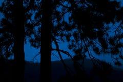 Пуща в вечере Голубая предпосылка с деревьями Стоковое Изображение