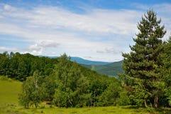 Пуща в горах Стоковые Фотографии RF