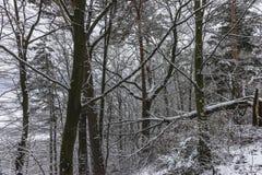 Пуща в зиме Стоковое фото RF