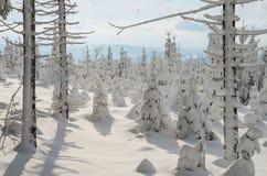 Пуща в зиме Стоковые Изображения