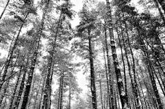 Пуща в зиме Стоковая Фотография RF