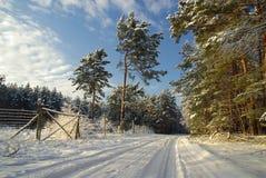 Пуща в зиме стоковые изображения rf