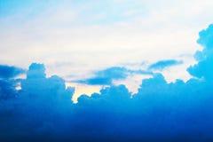 Пуща в лете Стоковое фото RF