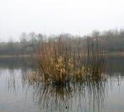 Пуща в осени Стоковые Фотографии RF