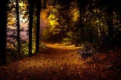 Пуща в осени Стоковые Изображения