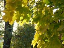 Пуща в осени Стоковое Изображение
