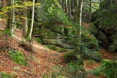 Пуща в осени Стоковое Изображение RF